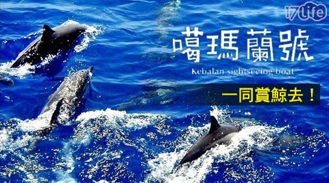 噶瑪蘭/賞鯨/假日不加價/親子/全家/消暑/暑假