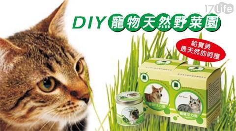 迎光/DIY/寵物/天然/野菜園/活力麥草/貓/犬食用/貓薄荷/栽培罐