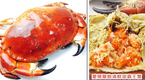 愛爾蘭飽滿鮮甜霸王蟹/霸王蟹/英國蟹/愛爾蘭/霸王蟹/愛爾蘭霸王蟹